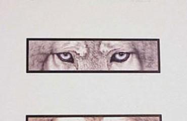 The Predators Horizontal – D.K. Dennis