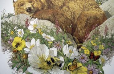 Bugged Bear – Mini Print – Bev Dolittle