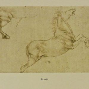 Queen's Collection - Leonardo da Vinci