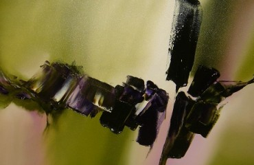 Violet's Back – Paul Tapia