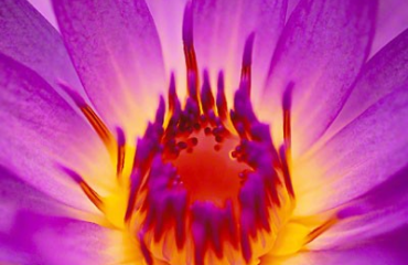 Eternal Flame by Peter Lik