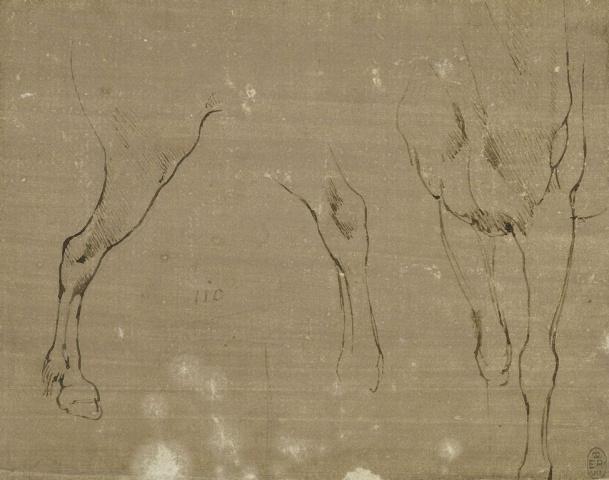 77 recto Leonardo da Vinci Queen's Collection